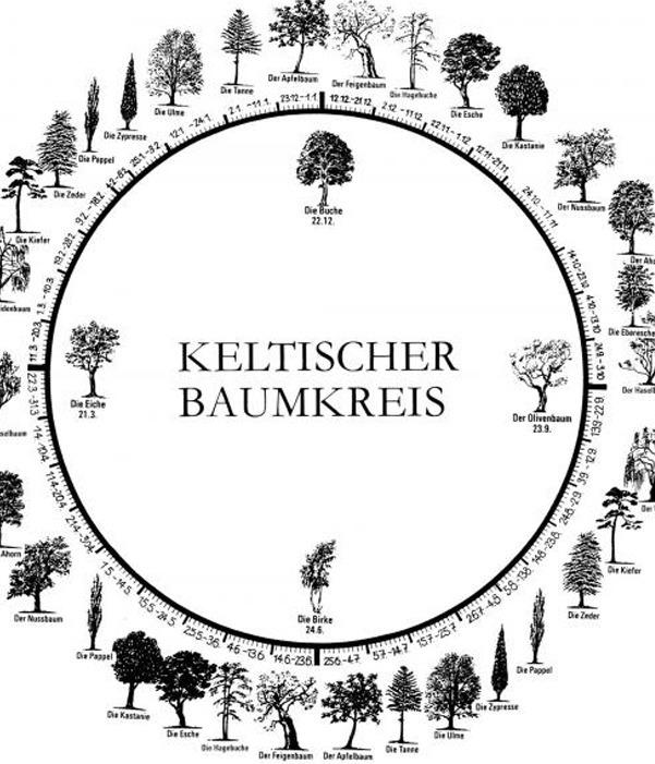Der keltische Baumkreis besteht aus 4 Hauptbäumen und 18 weiteren Bäumen