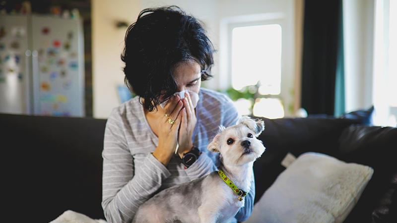 Welche Hunderassen sind für Allergiker geeignet?