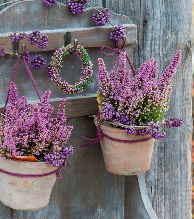 Heidepflanzen als Tür-Dekoration. Sieht klasse aus!