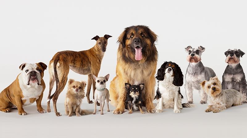 Welche Hunderassen haaren nicht?