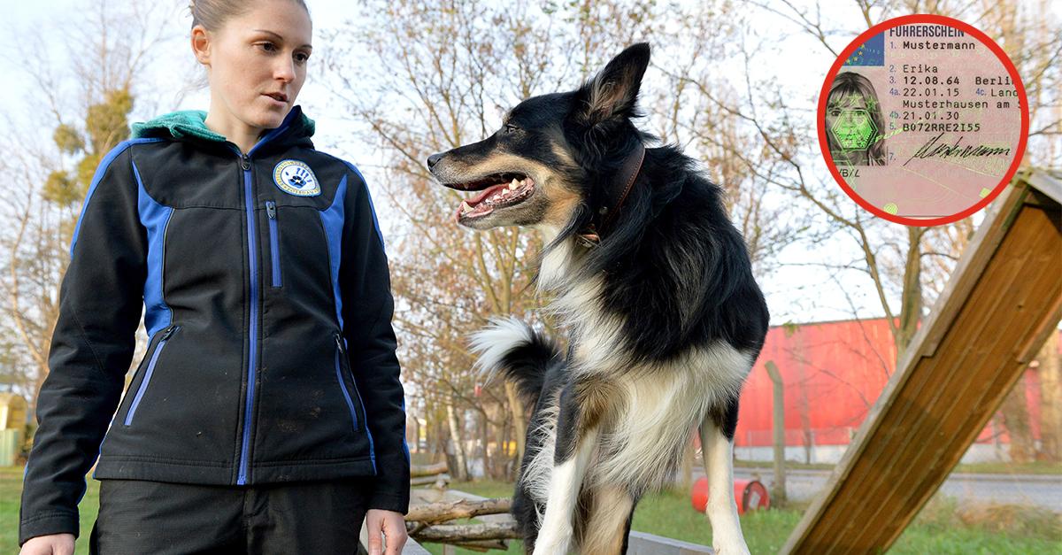Hundeführerschein Pflicht