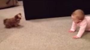 Dieser Hund klaut dem Baby sein Spielzeug und bereut es