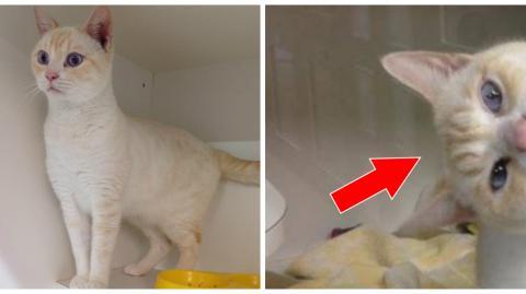 Ein Kater kommt ins Tierheim, doch entwickelt schnell eine Technik, um Aufmerksamkeit zu erregen und adoptiert zu werden!