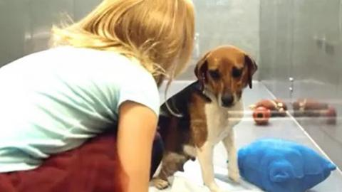Wer bis jetzt noch nicht daran gedacht hat, einen Hund zu adoptieren... Der sollte sich dieses Video anschauen!
