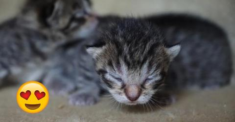Zwei herzallerliebste Kätzchen wagen ihre ersten Schritte mit offenen Augen
