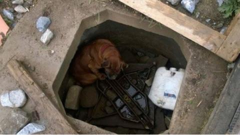 Ein kleines Mädchen findet einen in einem Betonloch ausgesetzten Hund