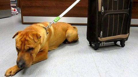 Dieser Hund wurde mit seinem Koffer am Bahnhof ausgesetzt. Heute ist er kaum wiederzuerkennen