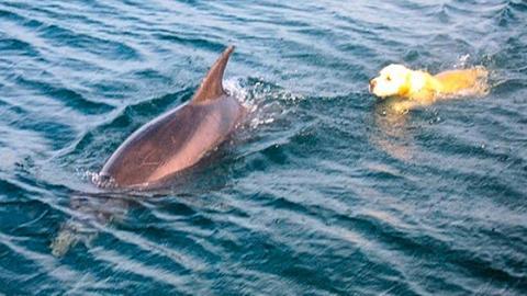 Ungleiches Paar: Hund und Delfin werden beste Freunde