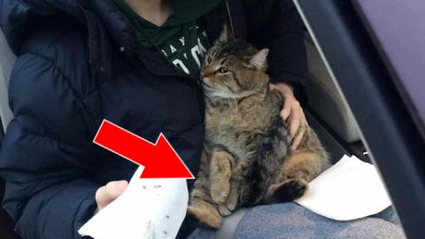 Ein Jugendlicher rettet eine Katze, die aus einem fahrenden Auto geworfen worden ist!