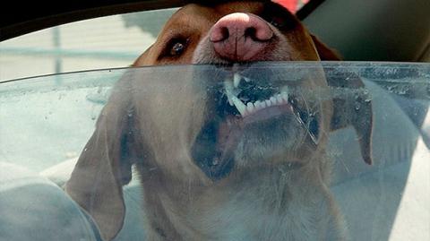 Das Spiegelei-Experiment zeigt es: Lass Deinen Hund nie in der Sonne im Auto zurück!