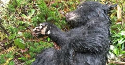 Mann findet Bärenbaby in Not: Er trifft eine mutige Entscheidung