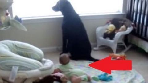 Als diese Mutter den Hund bellen hört, denkt sie zuerst, dass irgendwas passiert sei. Doch das hat sie nun wirklich nicht erwartet!