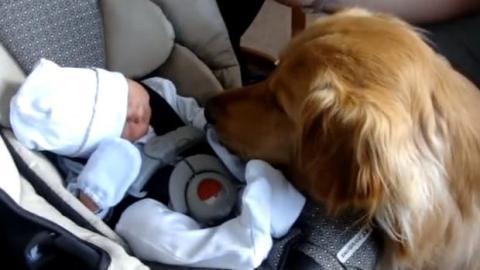 Dieser Hund sieht dieses Baby zum ersten Mal. Schauen Sie sich seine Reaktion an!