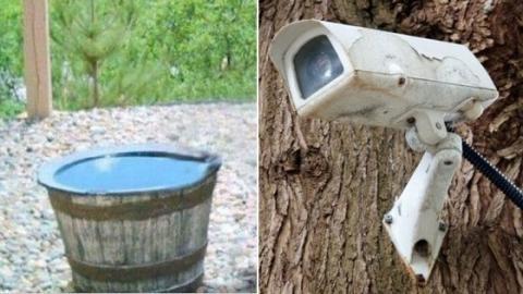 Als sie die Bilder der Überwachungskamera im Garten sehen, trauen sie ihren Augen nicht