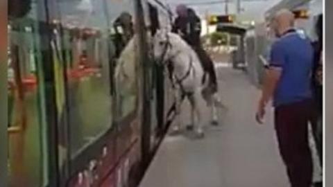 Warum steigt dieser Mann nur mit einem Pferd in die Straßenbahn?