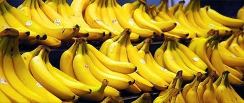 Ist die Banane vom Aussterben bedroht?