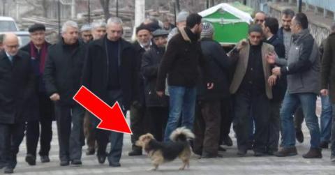 Ein Hund nimmt bei der Beerdigung seines Herrchens Abschied