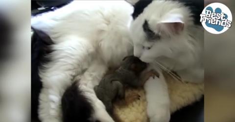 Diese Katze hat ein ganz außergewöhnliches Findelkind! Einfach zu süß!