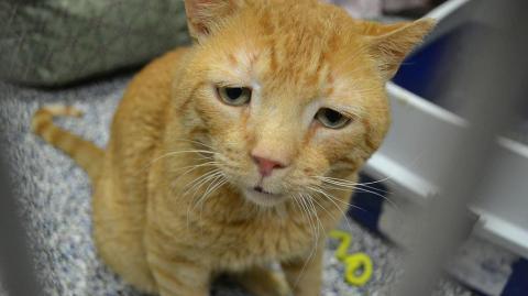 Über 5 Jahre ist diese Katze die traurigste der Welt