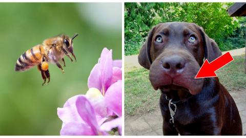 Dein Tier wurde von einer Biene oder Wespe gestochen? Das hier darfst du auf keinen Fall tun!