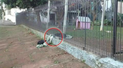 Ein Hund wird gerettet und teilt seine Decke mit einem anderen streunenden Hund