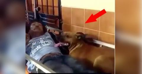 Sein Herrchen wurde ins Krankenhaus eingeliefert. Was der Hund dann tut, ist wirklich herzerwärmend!
