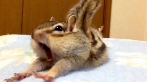 Dieses Streifenhörnchen liebt sein neues Bett