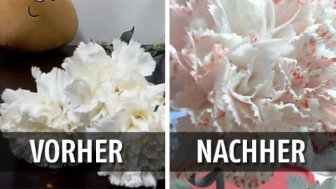 Sie gießt nur ein paar Tropfen Lebensmittelfarbe in eine Vase und die Blume wird super schön! Unbedingt nachmachen