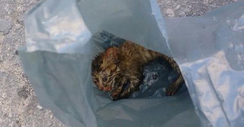 Sie findet ein Kätzchen in einer Plastiktüte: Erst zuhause merkt sie, in welchem Zustand es ist!