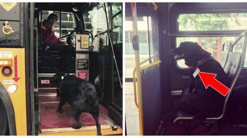 Eine Hündin nimmt regelmäßig allein den Bus und fährt damit in den Park
