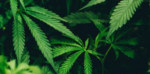 Cannabis-Konsum: Diese Berufsgruppen sind betroffen