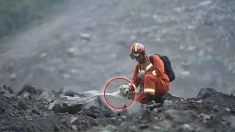 China: Ein Hund, der beim kürzlichen Erdrutsch im Schutt umherirrte, bewegt das Netz