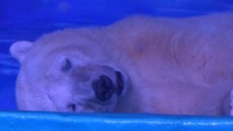 Dieser Eisbär fristet ein trauriges Dasein in einem Einkaufszentrum in China, um für Selfies missbraucht zu werden