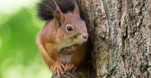 Eichhörnchen in Gefahr: So kannst du helfen, bevor es zu spät ist