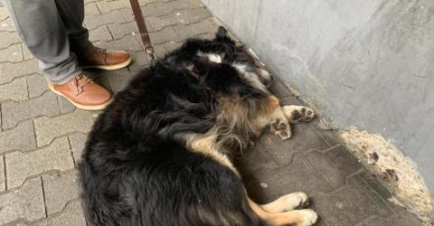 Kein Geld für Behandlung: Deutscher Rentner muss hilflos zusehen, wie sein Hund zusammenbricht