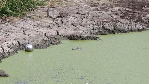 Krokodil in deutschem Baggersee sorgt für Panik