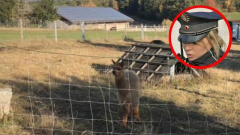 Bayern: Große Wut nach Drama in Tiergehege