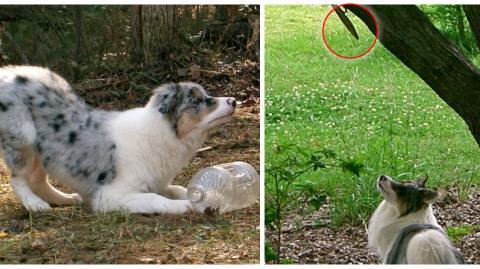 Dieser Hund ist von Eichhörnchen völlig fasziniert und bekommt zu seinem Geburtstag etwas wirklich Außergewöhnliches!