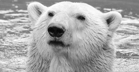 Knuts Papa ist tot! Traurige Nachricht für alle Eisbär-Freunde!
