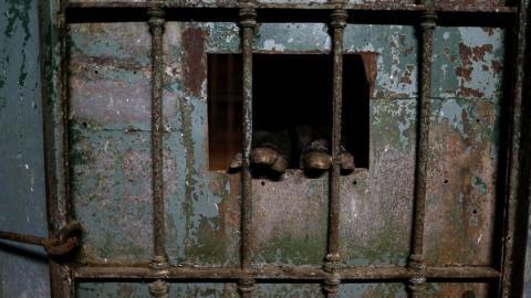 Reporter dringen in geschlossenen Zoo ein und trauen ihren Augen kaum