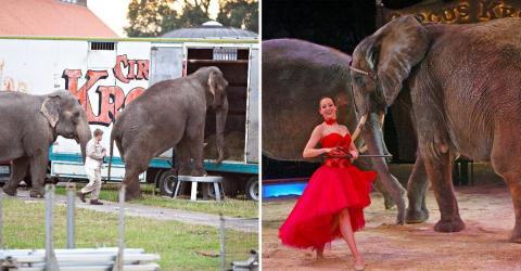 Riesenaufregung um Circus Krone: Tierfreunde sind tierisch sauer!