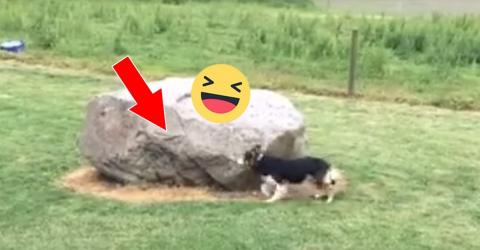 Hund spielt Fangen mit Ente