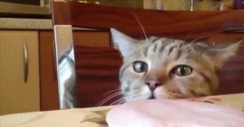 Kaum ist ihr Frauchen aus der Tür, macht die Katze etwas Freches