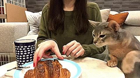 Beim Frühstück sorgt diese Katze für einen Lachanfall!