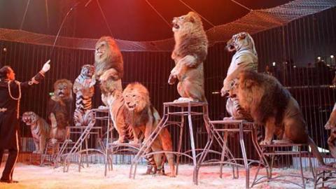 Portugal erlässt Verbot für Tiere im Zirkus