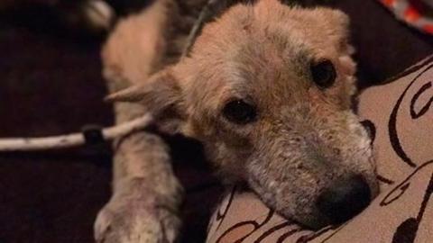 Besitzer binden Hund im Wald fest und lassen ihn allein