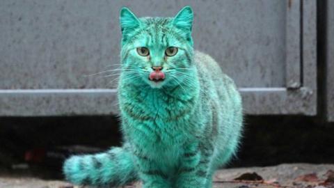 Alle dachten, dass diese Katze ein schlechter Scherz sei. Der wahre Grund ist mehr als überraschend.