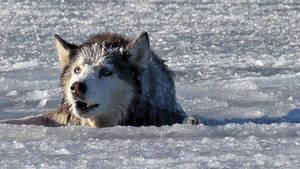 Dieser Hund war im Eis gefangen. Was dieser Mann danach getan hat, ist super.