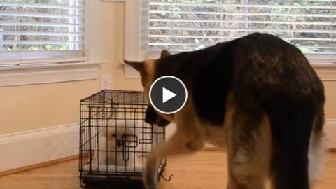 Ein Hund hilft seinem Gefährten beim Ausbruch aus dem Käfig. Zwei total süße Schlingel!