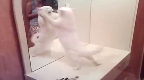 Diese Katze mag ihr Spiegelbild ganz und gar nicht!